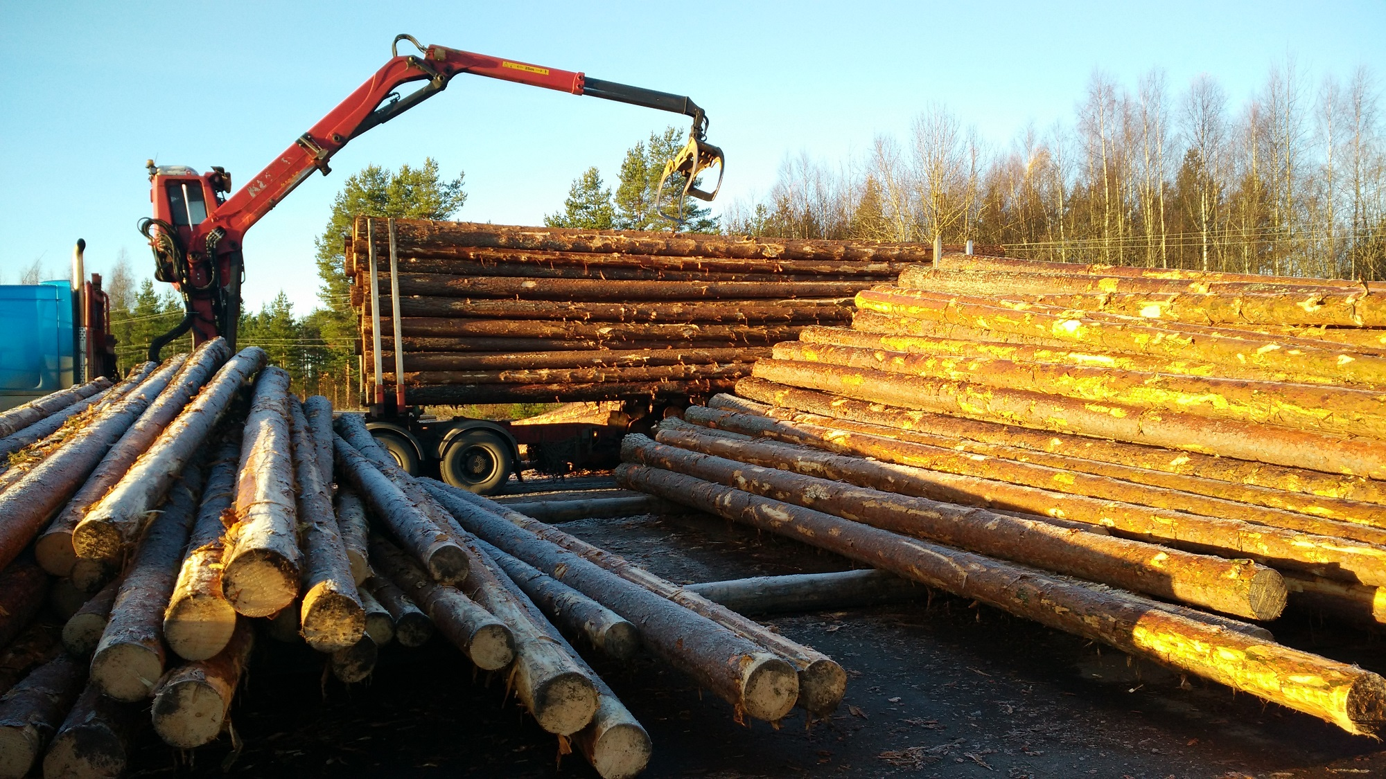 Wooden poles with creosote treatment